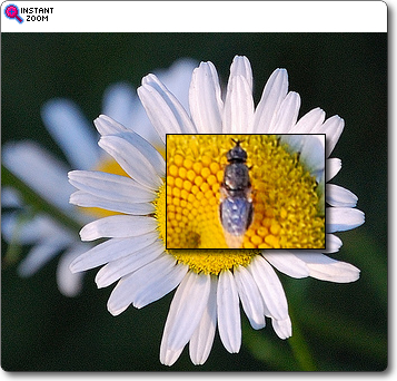 FlickR Instant ZOOM Feture
